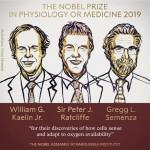 Нобелевская премия по медицине 2019 г.